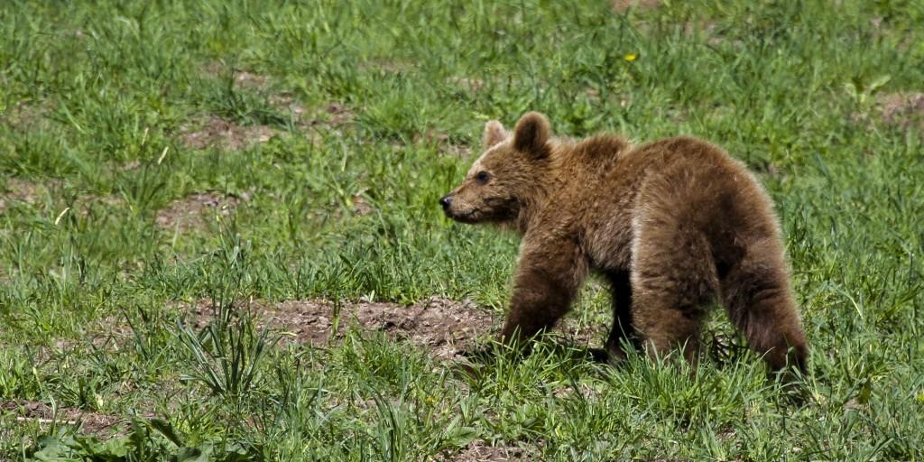 Aumenta la demanda de hoteles en Lleida para disfrutar del turismo sostenible vinculado al oso pardo